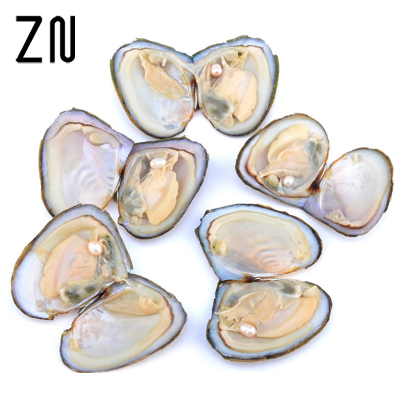 Gifts Wrapped Natural-Freshwater-Pearl Large Pearl Oysters With Birthday-Gift Individually