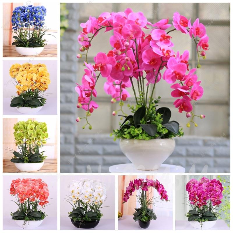 Купить тюльпаны оптом от 100 шт. в москве доставка цветов и шаров спб дешево
