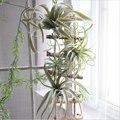 Искусственная воздушная трава Tillandsia суккулентный лист ананаса стекаются поддельные растения стол цветок украшение в виде свадебного буке...