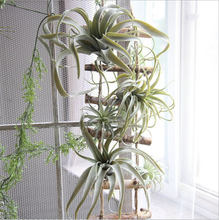 2018 nouveauté plante à air artificiel Tillandsia plante artificielle succulente feuille d'ananas(China)