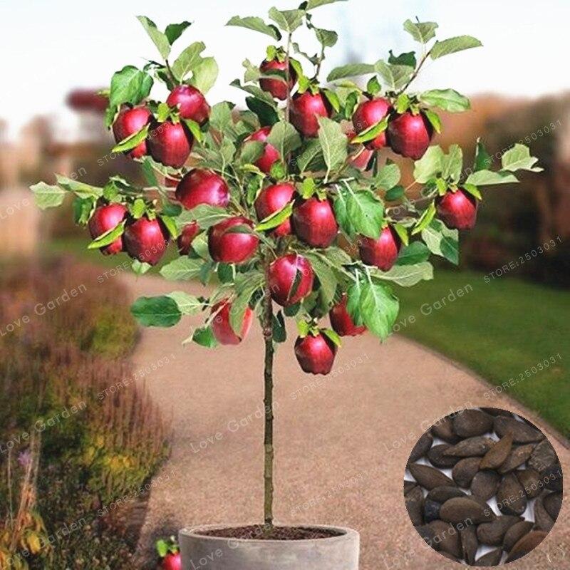 50 шт./пакет Райское яблоко карликовые деревья миниатюрный яблоня сладкий органический фрукты овощи карликовое дерево в горшке или открытый...