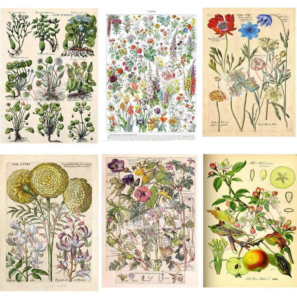 Flowers Vegetation Plant Science Shabby Chic Vintage Inkjet