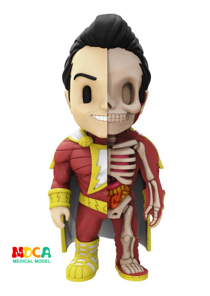 Shazam 4D XXRAY master Mighty Jaxx Jason Freeny anatomy Cartoon ornament robin hood 4d xxray master mighty jaxx jason freeny anatomy cartoon ornament