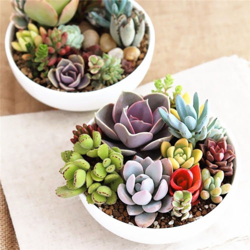 100PCS Succulent Rare Office Decor Mixed Succulents Seeds Easy Sowing Four Seasons Plants Potted Plant Home Garden Diverse