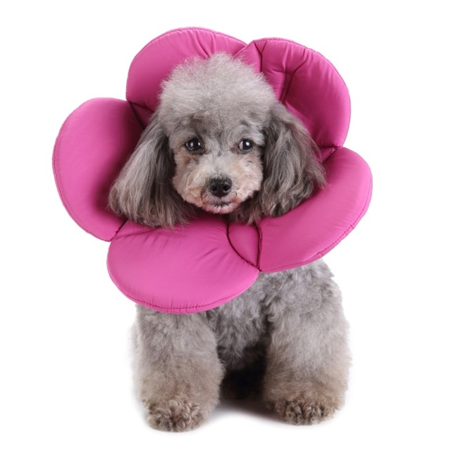 Recovery Pet Cone  For Cats and Dogs