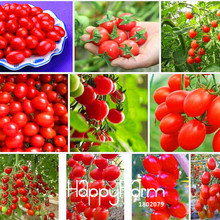 Loss Promotion!Cherry tomato seeds,red tomato cherry tomatoes,Original Package vegetables fruit seed,30 Seed/Lot,#85EYCP