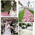 Maphia  Rose Petals 5000pcs BULK Silk Colors Fabric Loose Pink Artificial Wedding Engagement Decorations Flower Petal