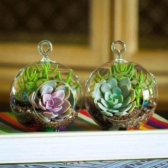 2pcs Pack Hanging Orb Plant Terrariums Air Plants Holders Fairy