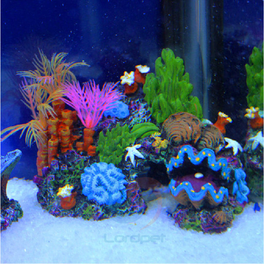 Buy resin mounted coral reef sucker fish for Fish caves for aquarium
