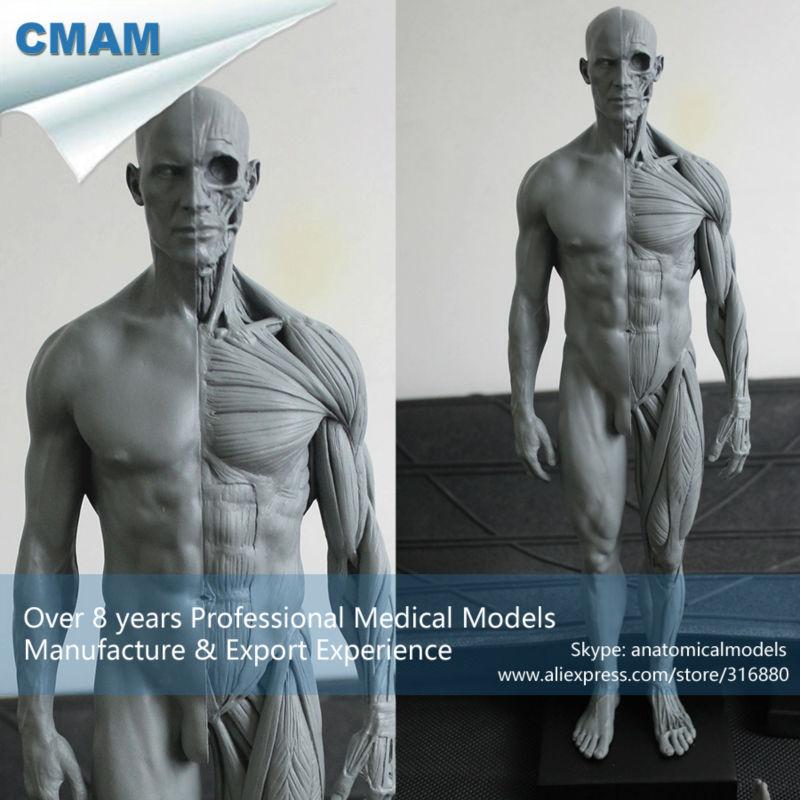 CMAM PRC01 30 cm esqueleto humano modelo anatómico anatomía ...