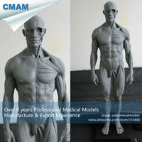 PRC01 Male Muscle Anatomy Model For Medical Study