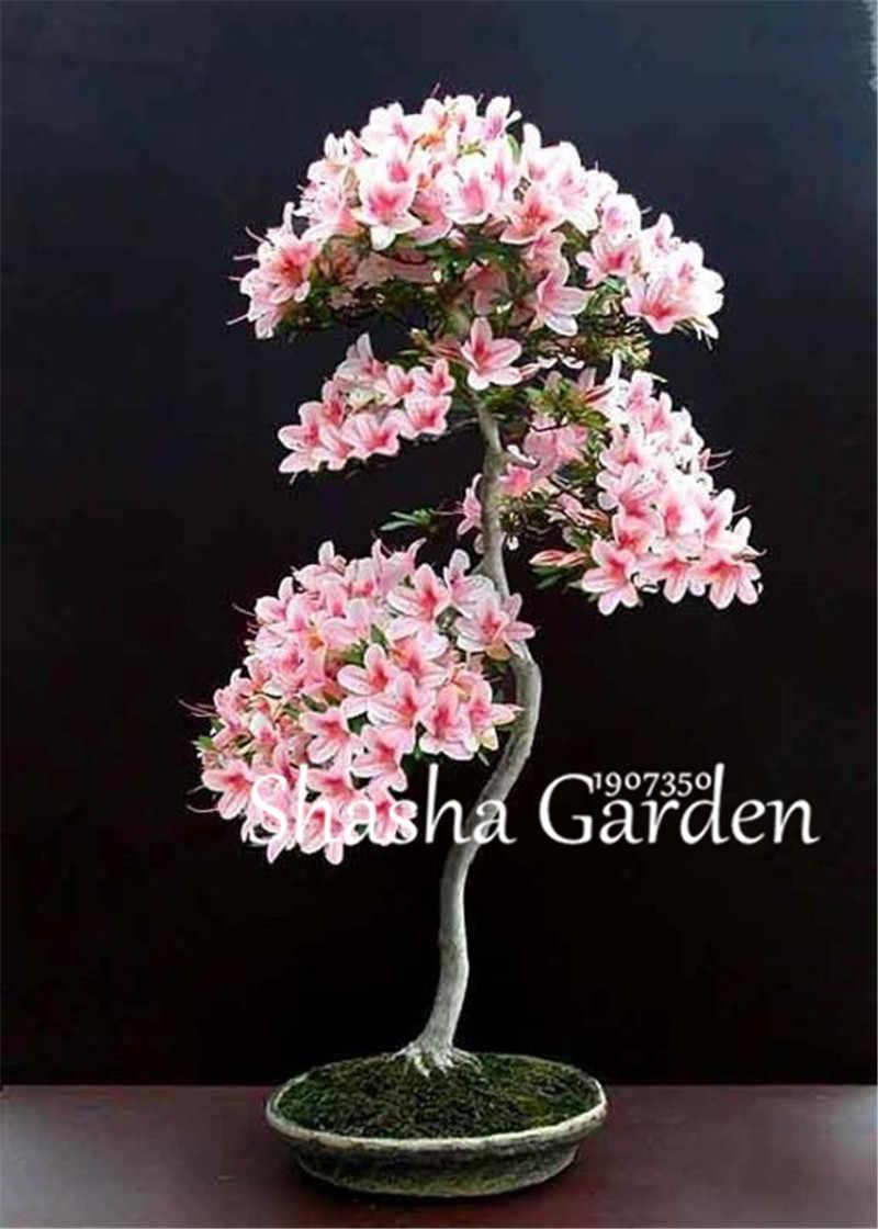 10 шт./пакет смешанный цвет японский Cherry ни завод Двор Сад бонсай дерево Флорес небольшой Сакура plantas