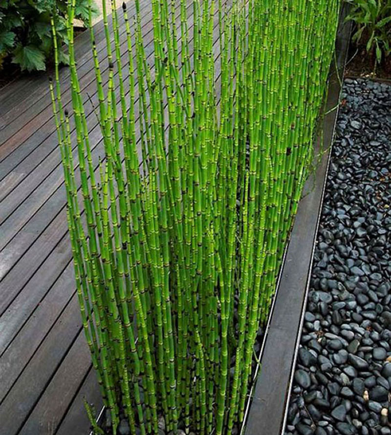 Popular indoor bamboo trees buy cheap indoor bamboo trees for Bambou interieur