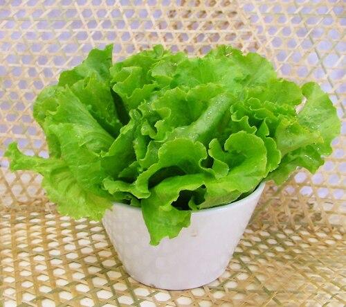 3 Packs Of Lettuce Seed / 1 Pack 100 Seeds Lactuca Sati