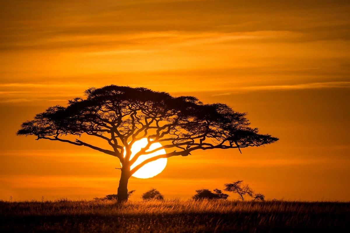 sunset african savannah nature landscape trees grasses ...