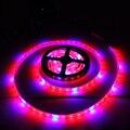 1 pcs full spectrum led crescer luz de tira smd5050 1/2/3/4/5 m led lâmpadas para plantas de floração crescente iluminação do aquário + led driver