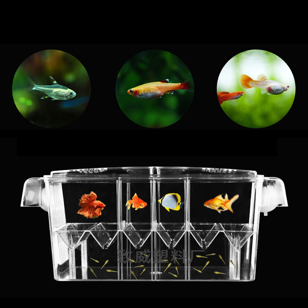 Guppies Breeding Box