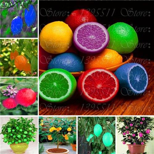 20 Pcs Rare Rainbow Lemon Seeds Organic Fruit Lemon T X