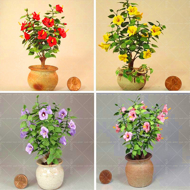 Aliexpresscom Buy 100pcs Mini Hibiscus Bonsai Chinese Hibiscus