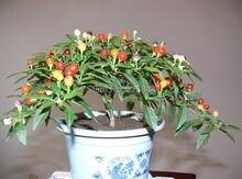 Декоративные перец, разноцветные декоративные перец, Семья Горшке перец-35 Семян частиц