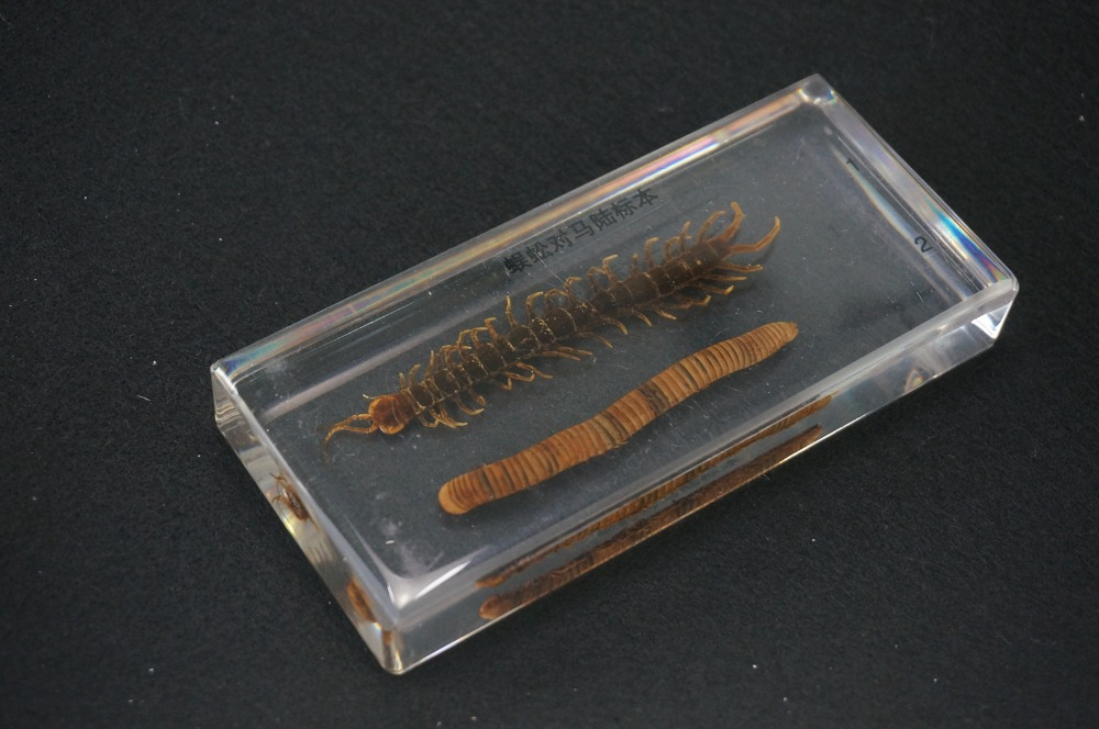 Centipede And Millipede Specimens In Clear Lucite Block Educational Equipment цена