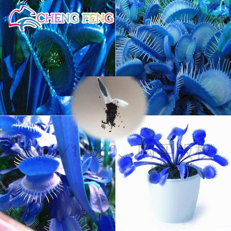 50 pcs promoção!!! azul vaso Insectivorous Dionaea Muscipula Gigante Clipe Flytrap Sementes Plantas Bonsai Sementes Muito Fácil Crescer Sementes de Flores Frete Grátis