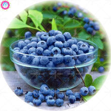 200pcs dwarf blueberry seeds Edible organic heirloom fruit seeds bonsai tree potted planting for spring home farm supplies 2018