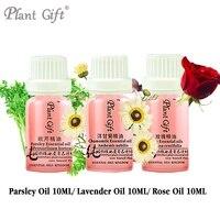 Free Shopping 100 Pure Plant Essential Oils Parsley Lavender Rose Oil 10ml Antibacterial Antispasmodic Dispels Flatulence