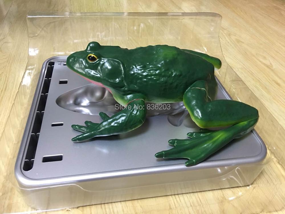Fantastisch Frosch Dissektion Labor Arbeitsblatt Zeitgenössisch ...