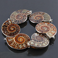 2016 New Ammonite Pendant Exquisite Fashion Brown Snail Shells Pendants For Necklace Men Women