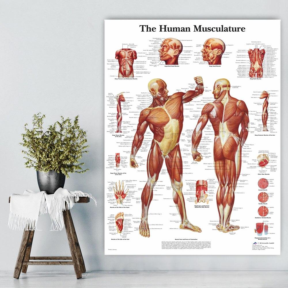 WANGART Menschlichen Anatomie Muskeln System Kunst Poster Drucken ...