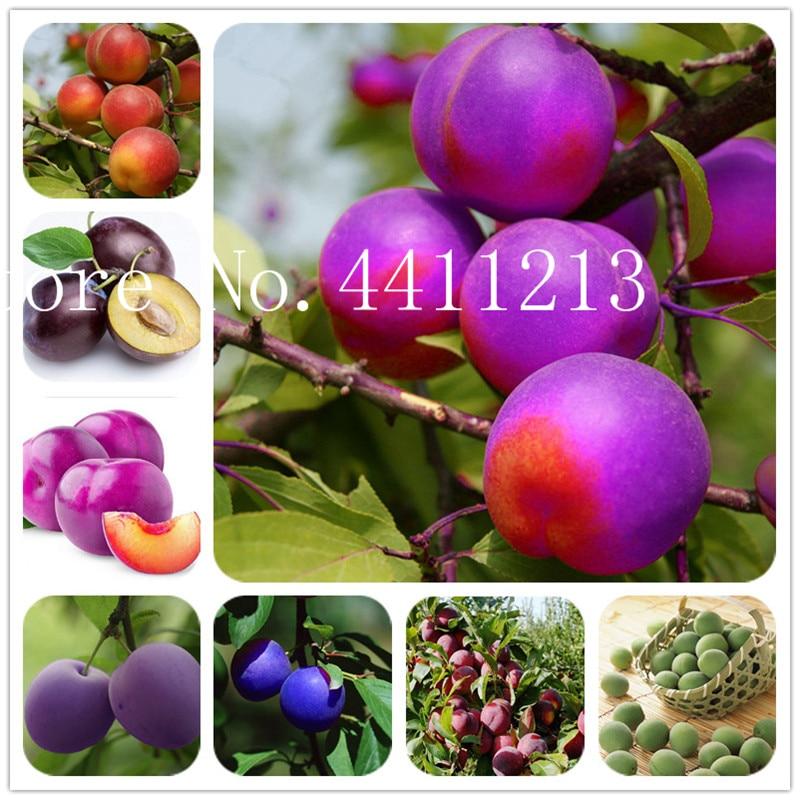 US $0 11 85% OFF|Sale! 10 pcs Black Brin Plum plants Very Tasty Prune Fruit  bonsai Tree Jardin plants Vegetables And Fruits Pot Plant Easy Grow-in