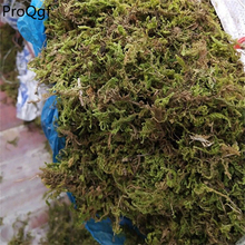 250 грамм набор суккулентных дорогих домашних животных водной травы мох