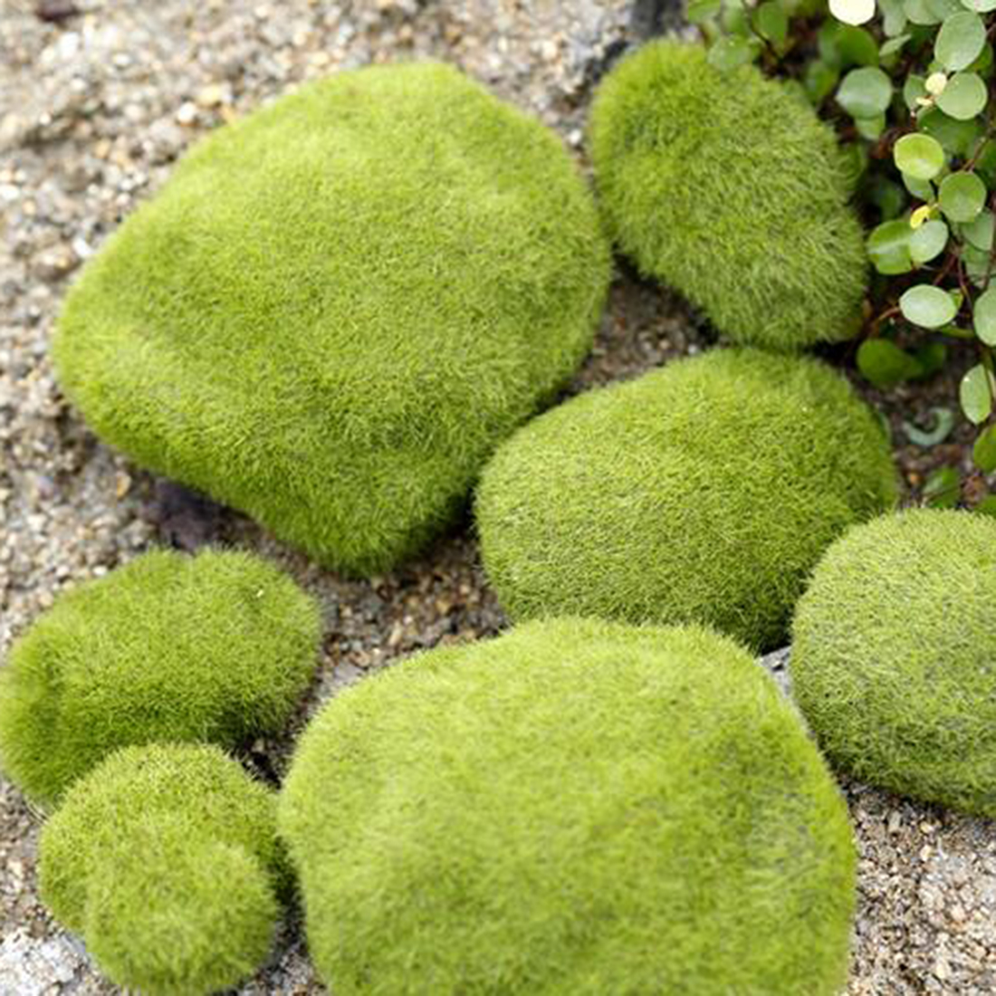 Hot Sale Green Moss Stone Garden Ornaments For Bonsai Display Nature Moss  Stone For Micro Landscape. Online Get Cheap Landscaping Tool  Aliexpress com   Alibaba Group