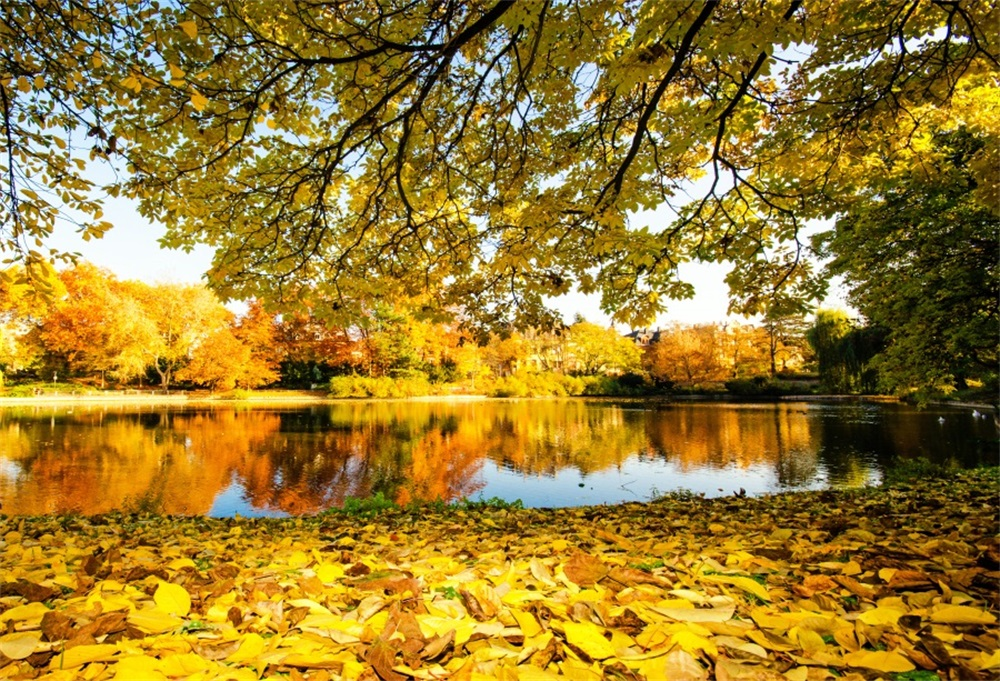 Laeacco Autumn Trees Fallen Yellow Leaves Lake Natural Scenic Photography Backgrounds Photographic Backdrops For Photo Studio