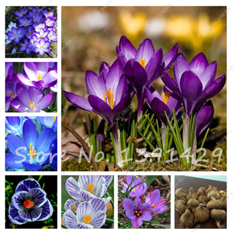 Popular Annual Bulbs-Buy Cheap Annual Bulbs lots from ...
