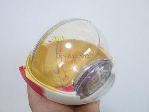 Image 5 - Modèles de lunettes 15CM de diamètre, de décoration spéciale, Figurines de décoration personnalisées en clinique, biologie, ophtalmologie, médecin