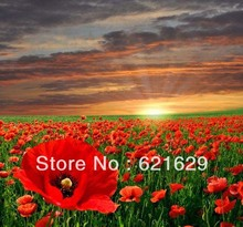 Vast expanse flowers 8'x8′ CP Computer-painted Scenic Photography Background Photo Studio Backdrop DT-XY-0007