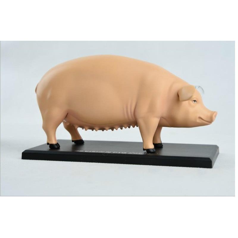 Assembly 4D Pig Anatomy Model Pig Anatomy Medical Anatomic Animal Model Puzzels for Children Skeleton Educational