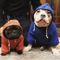 Dog Velvet Sweater Hoodies Clothes For Bulldogs Puppy Winter Clothes Vetements Chihuahuas Cute Dog Clothes