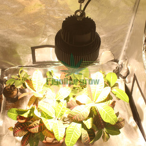 Image 3 - חדש DIY מלא ספקטרום בפועל כוח 100w COB cxb 3590 שבב LED לגדול אור עבור מקורה רפואת צמח