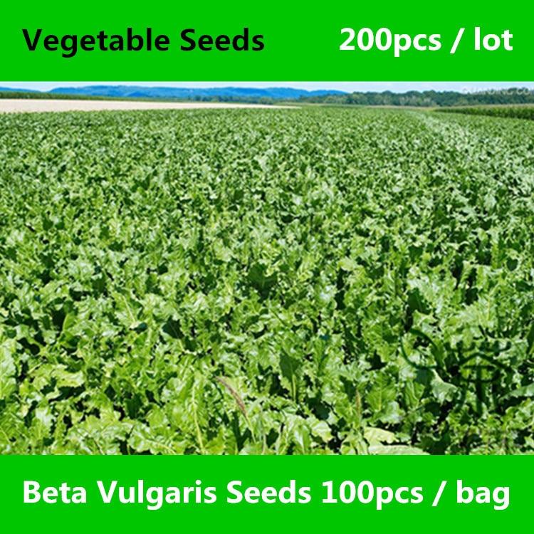 Leaf Beet Chard Beta Vulgaris Seeds 200pcs, Herbaceous