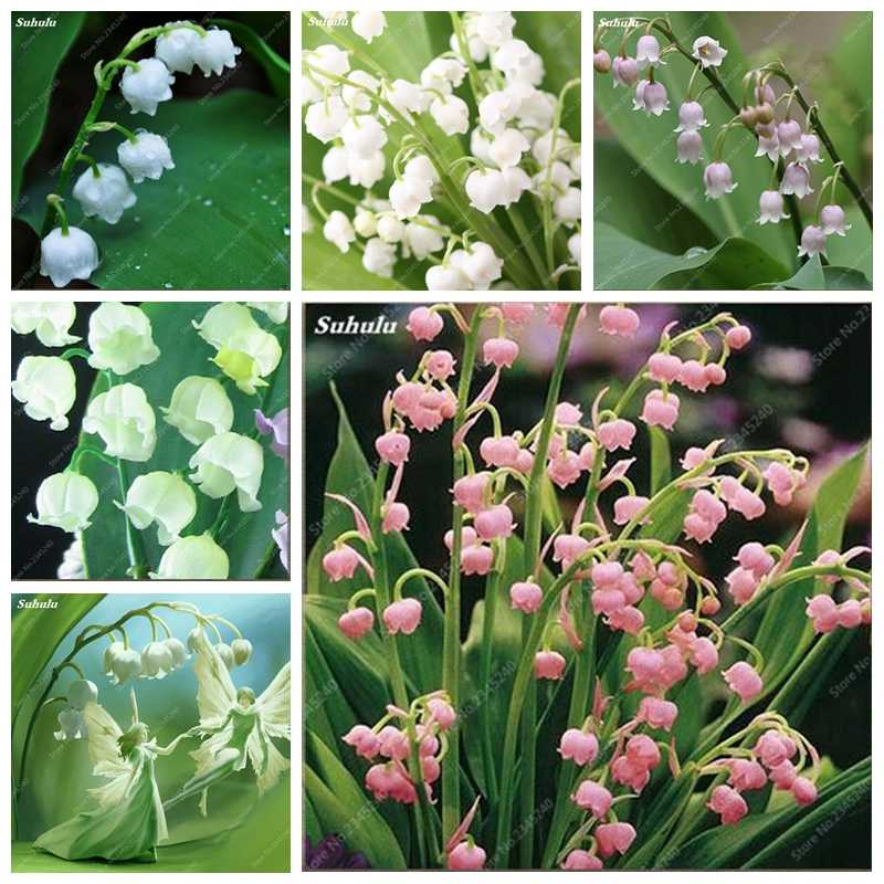 200Pcs/ bag Lily Of The Valley Flower Indoor Rare Color Bell Orchid Bonsai Plant Balcony Potted DIY Home Garden Christmas Decor