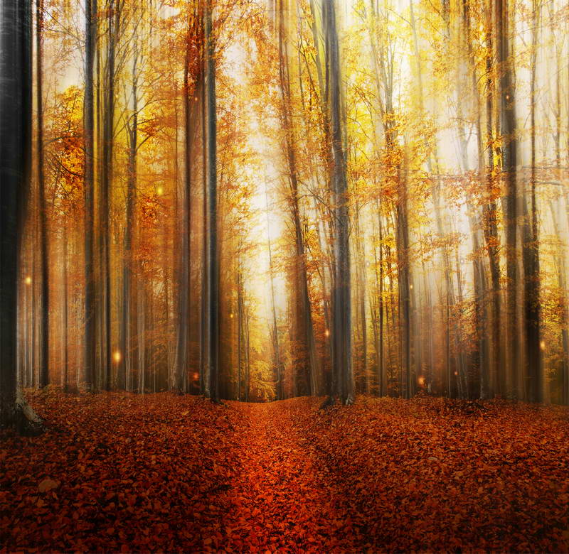 Mist Forest Sunset Scenic Photographic Background For