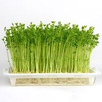 VICTMAX Горячая Sprouter пластина растения на балконе двухслойная кассеты для рассады рассада геминации лоток гидропоники корзина дропшиппинг