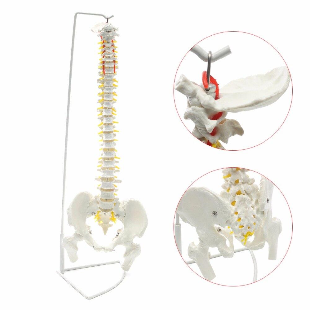 Profesional columna vertebral humana modelo Flexible anatómico médico quiropráctica W/Stand