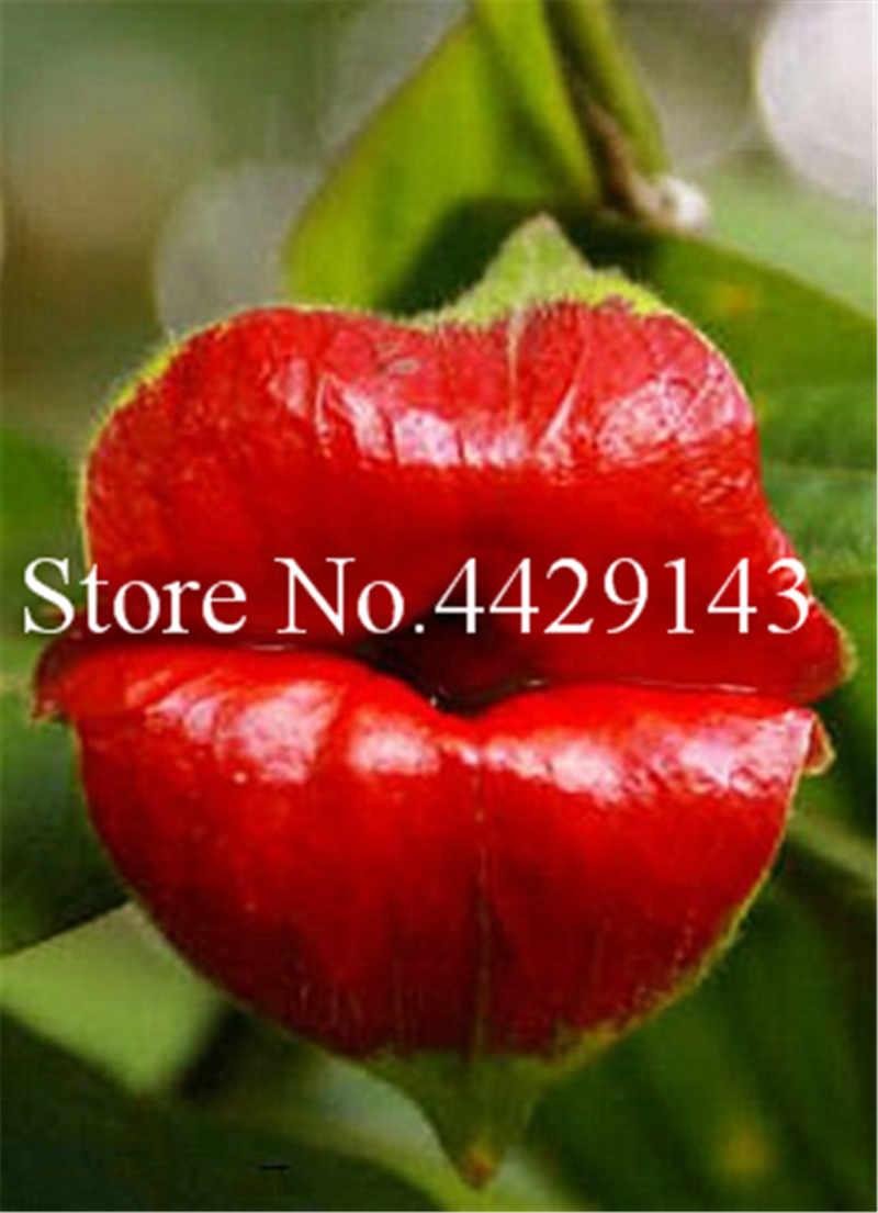 100 шт./пакет красные губы бонсай из цветов редкое цветение Горшки Бонсай японский Дом Сад чили красный цветок Многолетние растения Semente