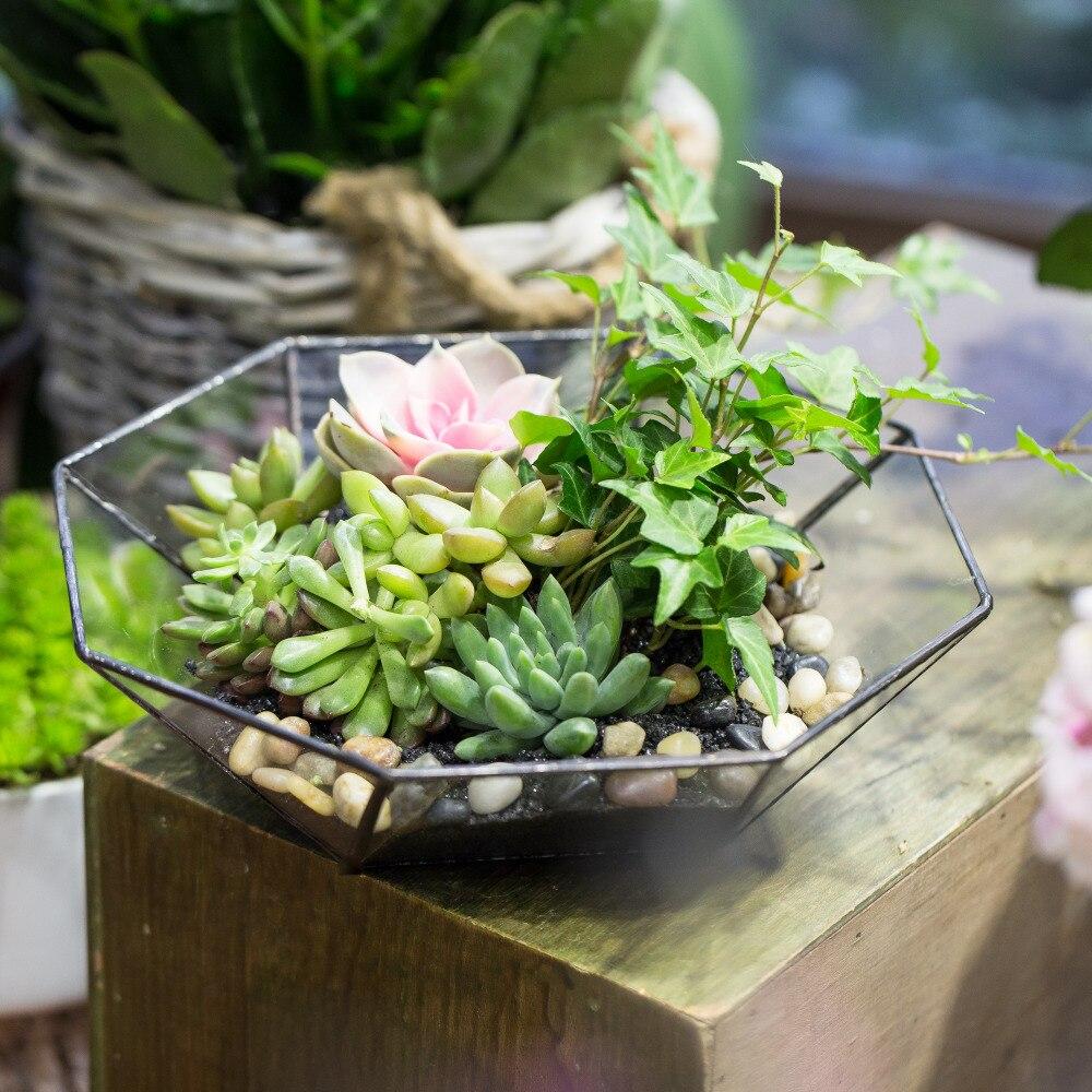 Moderne clair verre géométrique Terrarium Air plante succulente fougère mousse large-bouche maison jardin bonsaï Pot de fleur Terrarium boîte cadeau