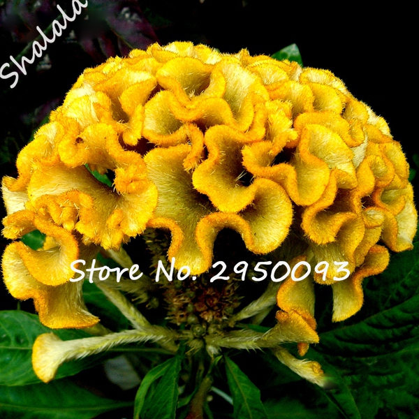 online get cheap exotic yellow flowers aliexpress  alibaba group, Beautiful flower