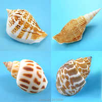 Natürlichen Weißen Muscheln Gelb Conch Strand Concha Schnecke Muschel Handwerk Aquarium Landschaft Aquarium Ornements Nautischen Decor 6 Karat